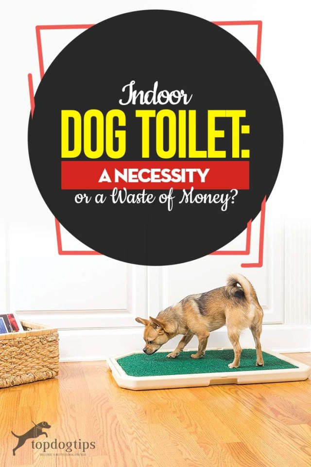 Indoor Dog Toilet for Winter Time - A Necessity or a Waste of Money