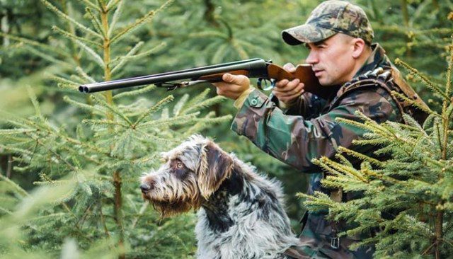 Proper introduction of dog to gun sounds