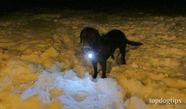 Rabbitgoo LED Dog Harness