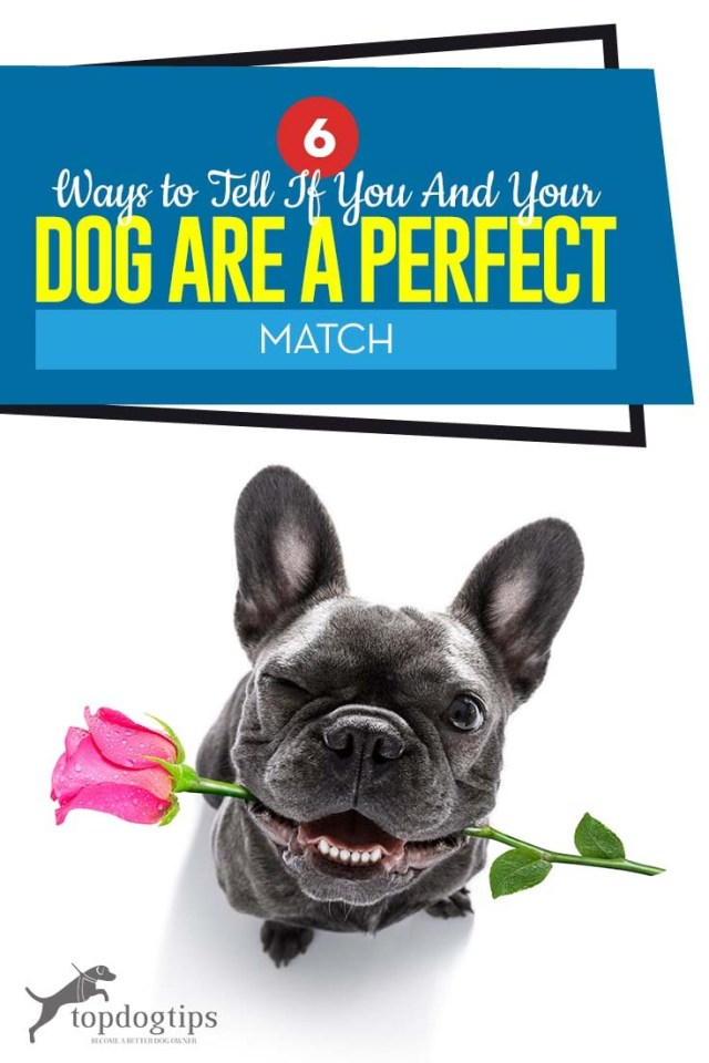 The 6 Ways to Tell If You and Your Adopted Dog Are a Perfect Match