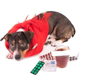 The Best Home Remedies for Canine Cold