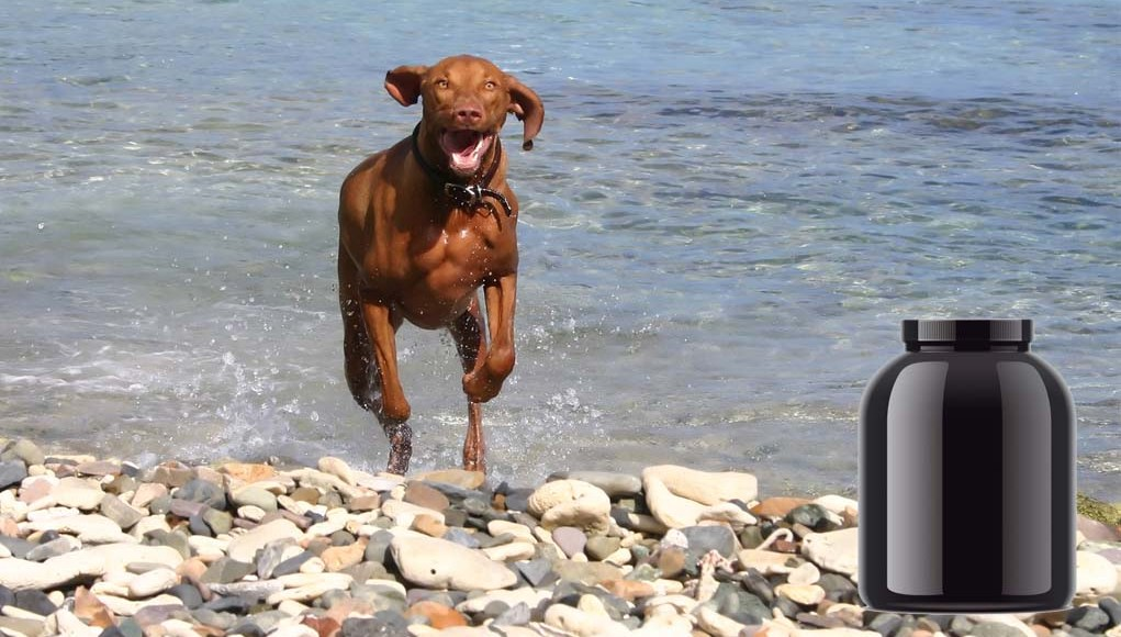 The Pet Owner's Guide to Dog Muscle Supplements
