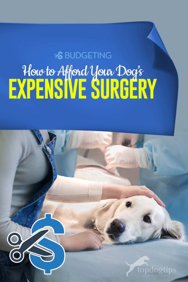 Tips on How to Afford an Expensive Pet Surgery