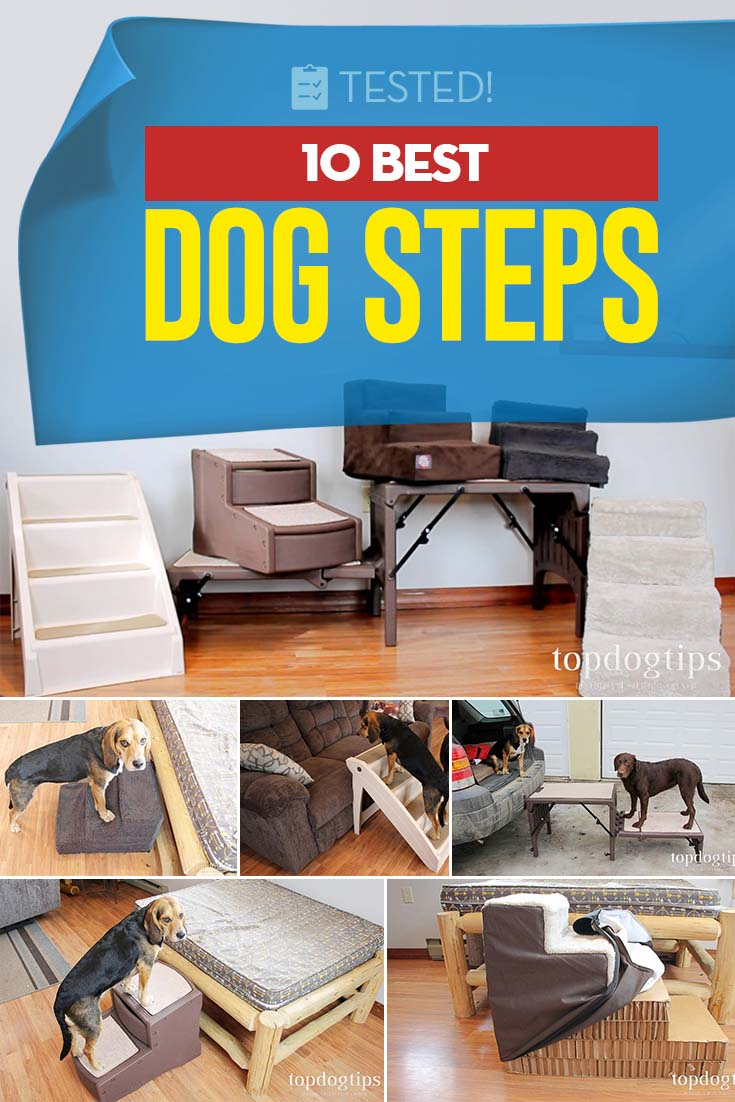 Top 10 Best Dog Steps Review