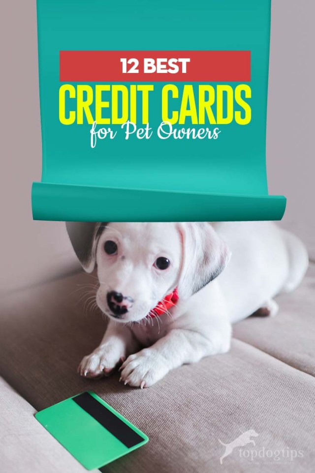 Top 12 Best Credit Cards for Pet Owners