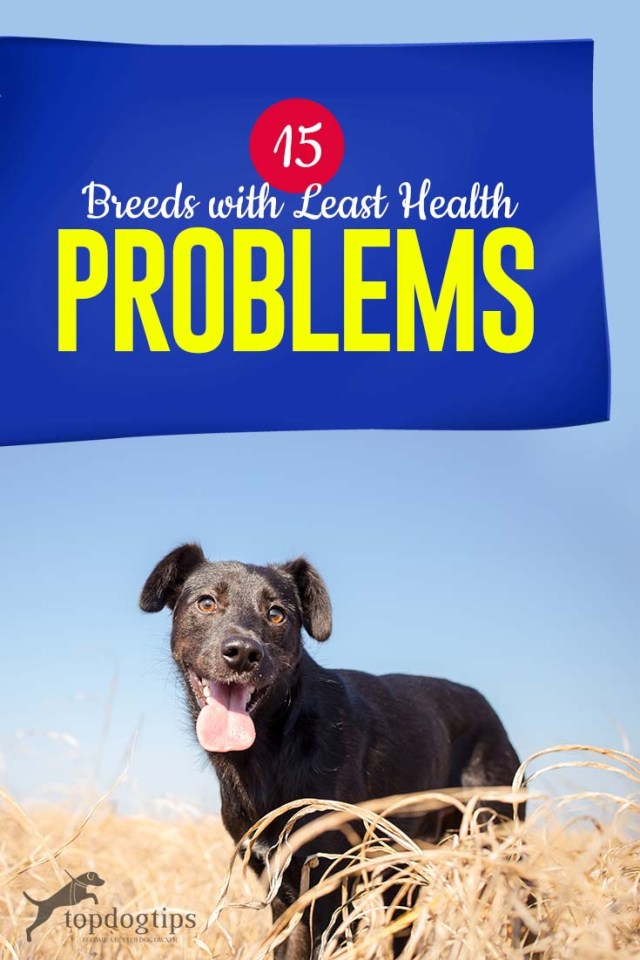 Top 15 Breeds with Least Health Problems