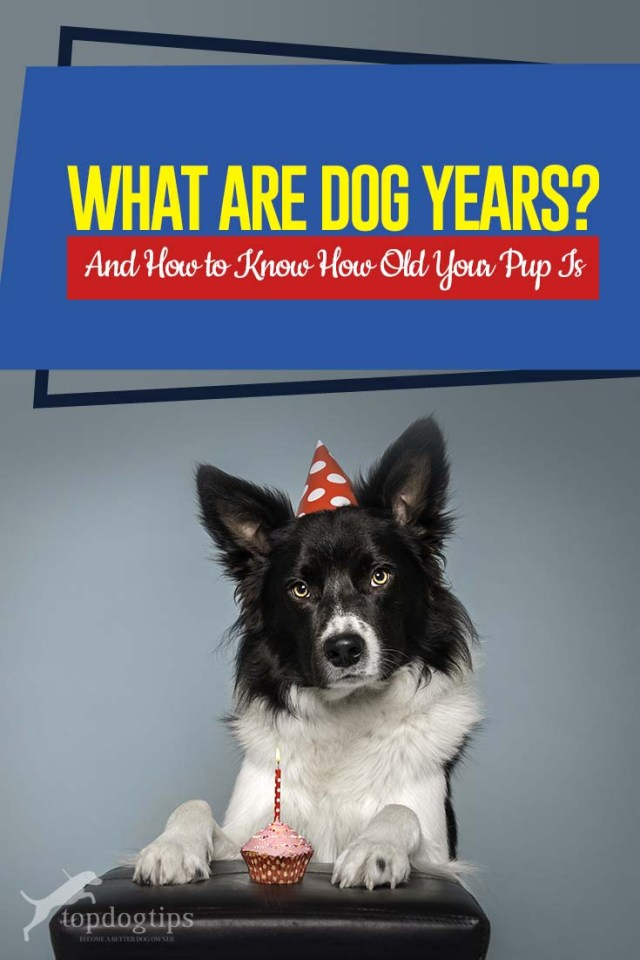 What Are Dog Years - How to Know How Old Your Pup Is