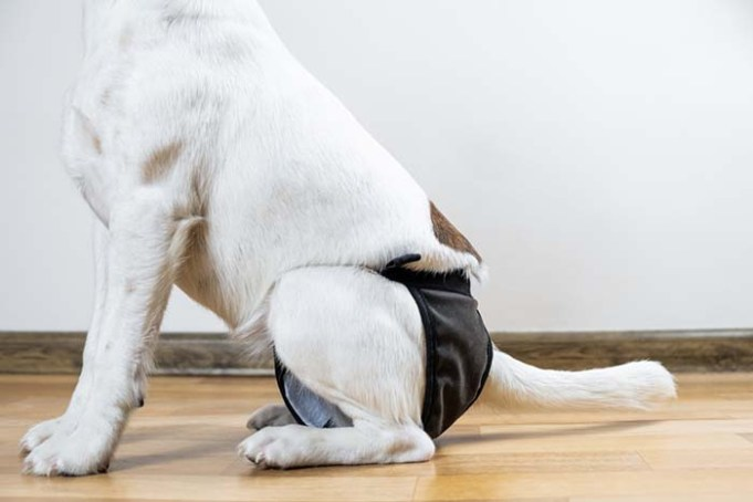 5 Bladder Problems in Dogs - How to Recognize Them and What to Do