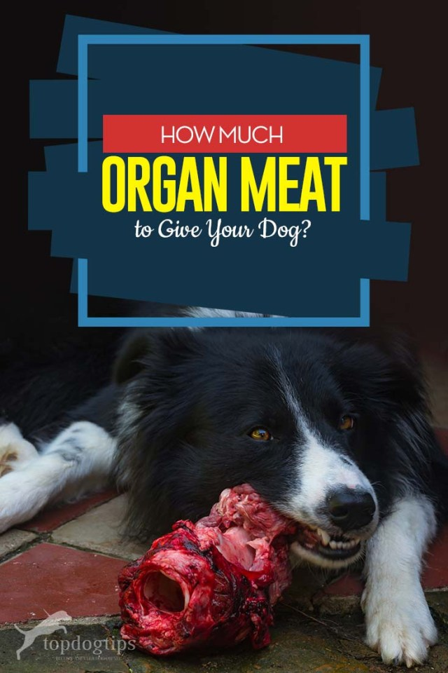 Advice on How Much Organ Meat to Give Your Dog