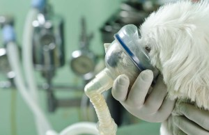Breathing Problems in Dogs - What It Means and How to Fix It