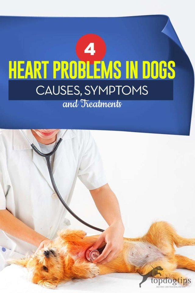 Common Heart Problems in Dogs