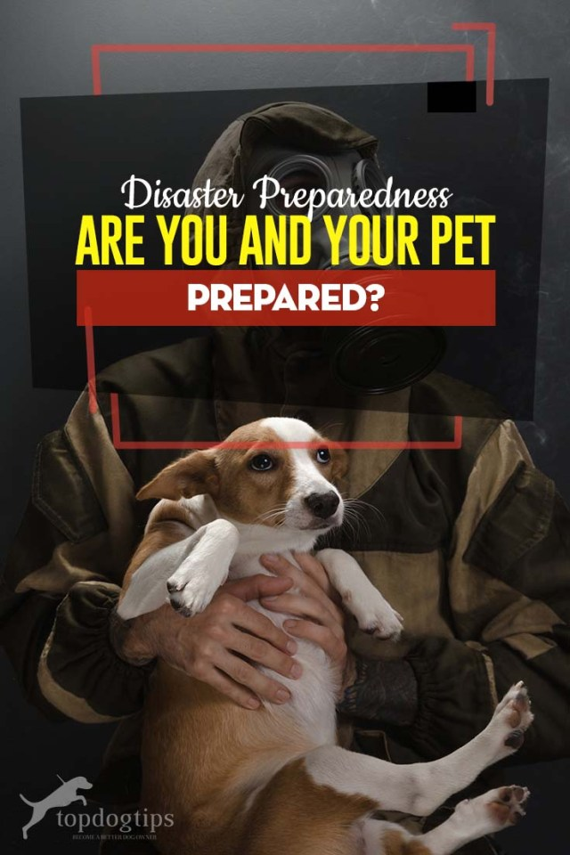 Disaster Preparedness Guide - Are You and Your Pet Prepared