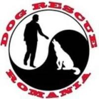 Dog Rescue Romania