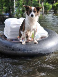 Evacuation of Dogs During a Disaster