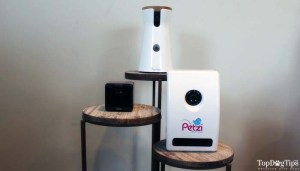 Review of Petzi and Other Cameras for Dogs