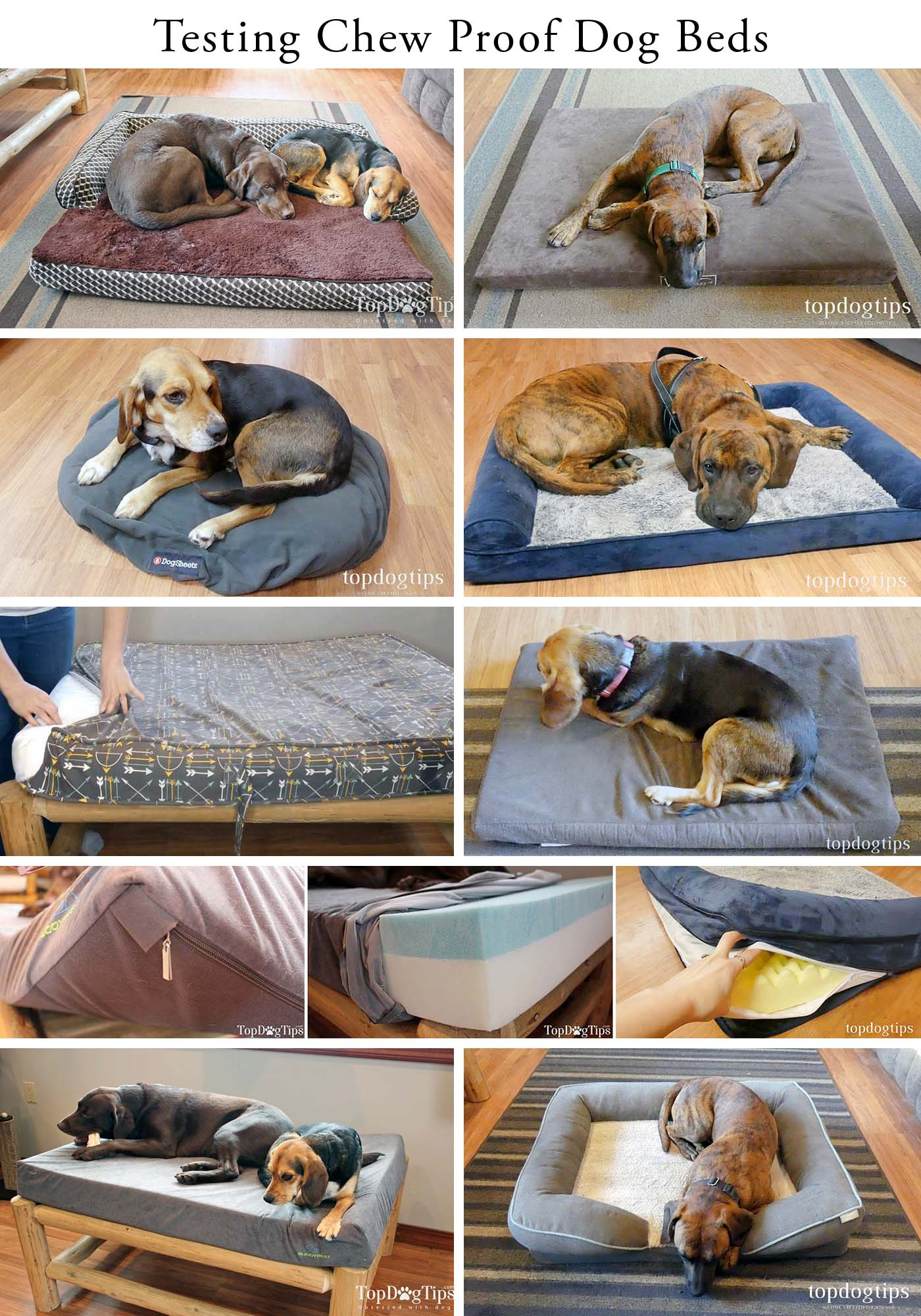 6 most chew resistant dog beds 2020