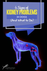 The 4 Signs of Kidney Problems in Dogs (And What to Do)