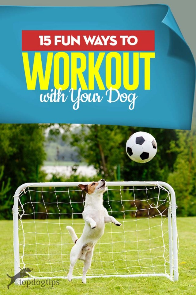 Top 15 Fun Ways to Workout With Your Dog