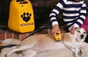20 Most Innovative Dog Products