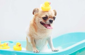 5 Best Portable Dog Bath and Tools