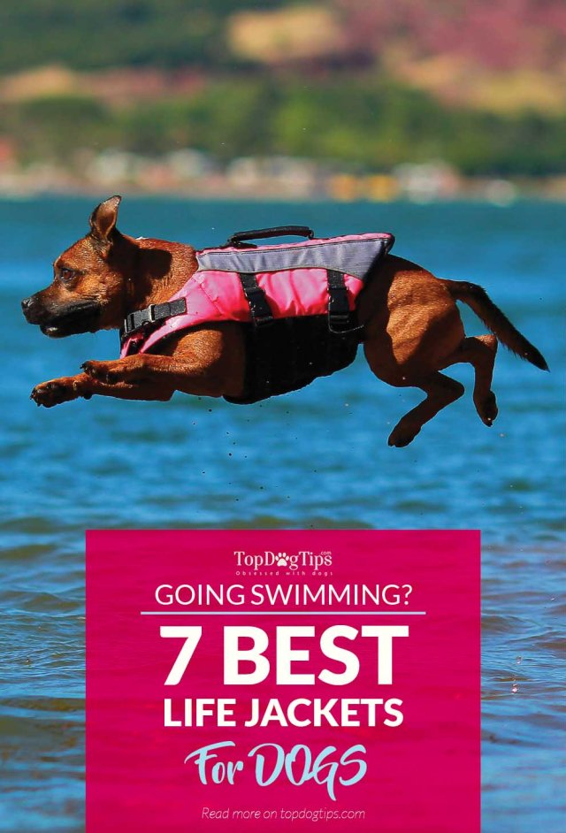 7 Top Rated Best Dog Life Jackets