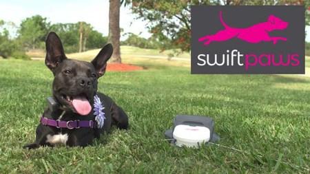 Brain-Stimulating Dog Game - Swift Paws