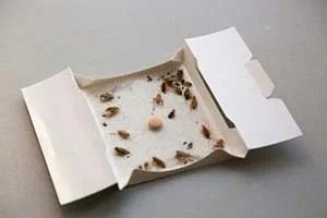 Glue flea traps