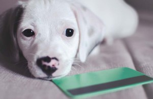 The 12 Best Credit Cards for Pet Owners