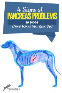 The 4 Signs of Pancreas Problems in Dogs (And What to Do)