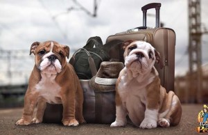 Tips for Traveling with Your Dog Podcast