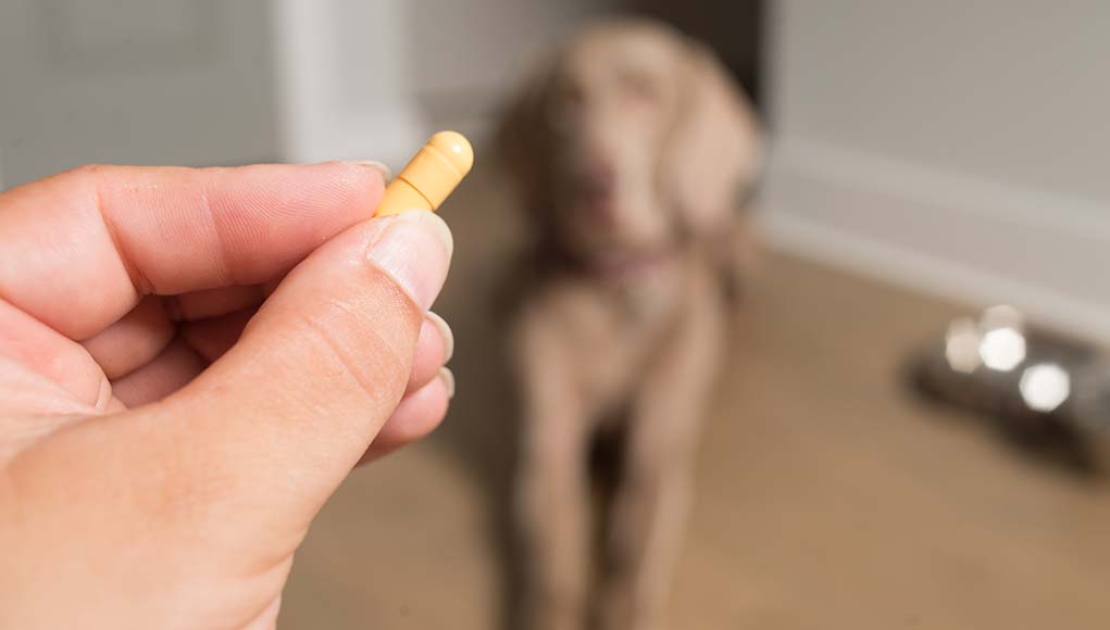 Tips on Using Over the Counter Dog Anxiety Medication