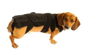 Veterinary orthopedic bandage for dog's back.