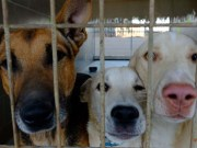 Rescuing Dogs from Foreign Countries