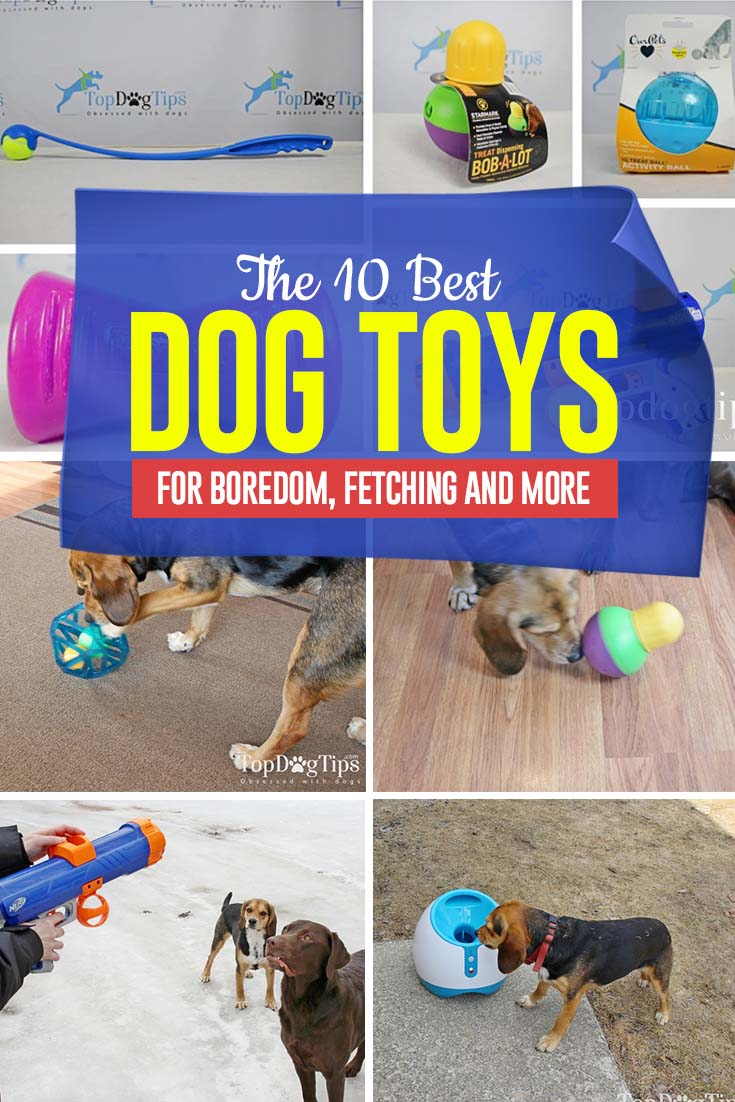 Top 10 Best Dog Toys for Boredom and More