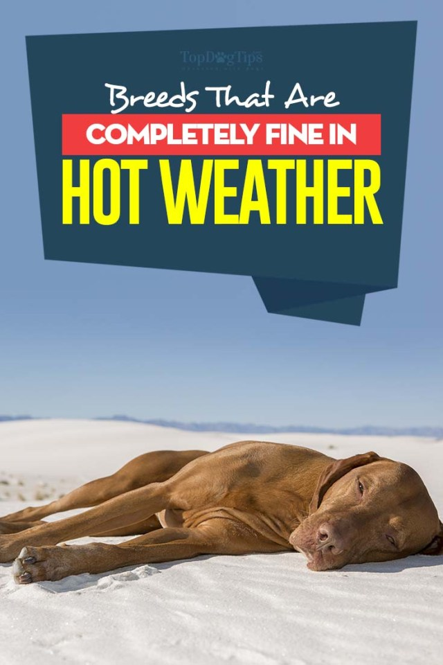 Top Breeds That Are Fine in Hot Weather