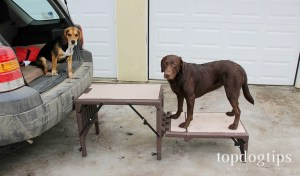 Pet Gear Free Standing Foldable Pet StairsBest for getting into high vehicles