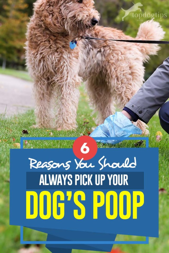 6 Important Reasons You Should Always Pick Up Your Dog's Poop