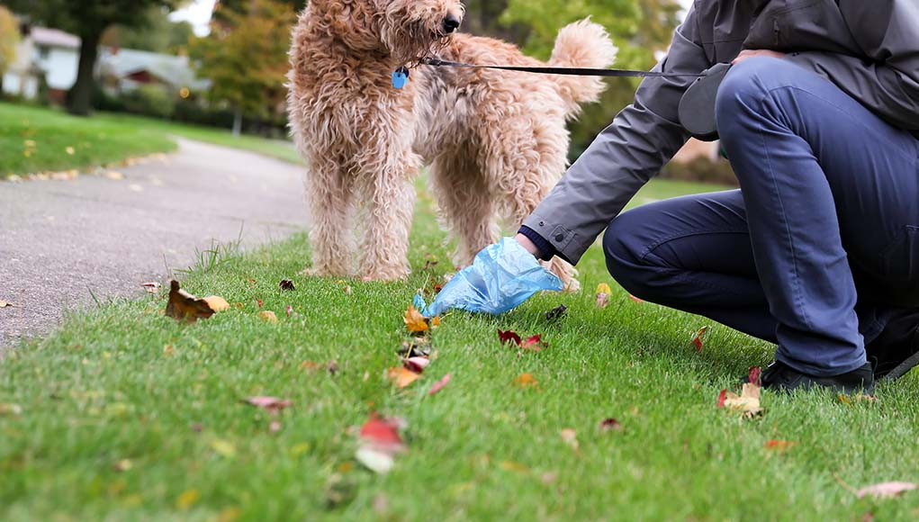 6 Reasons You Should Always Pick Up Your Dog's Poop