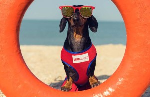 8 Water and Swimming Safety Tips for Dog Owners