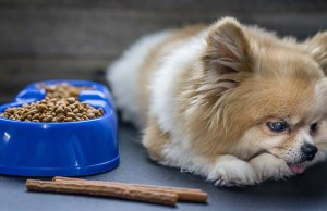 Anorexia in Dogs - 13 Reasons Why Your Dog Is Not Eating