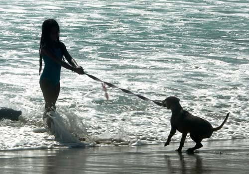 Don't Force Your Dog into the Water