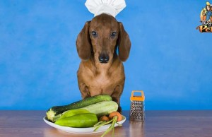 Is It Safe to Feed Dogs a Plant Based Diet