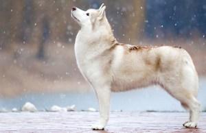 9 Ways to Improve Your Dog's Skin and Coat Health