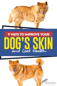 The 9 Ways to Improve Your Dog's Skin and Coat Health