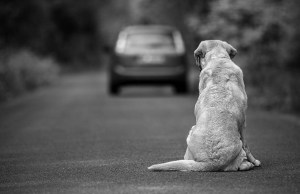 13 Reasons Why Owners Abandon Their Dogs