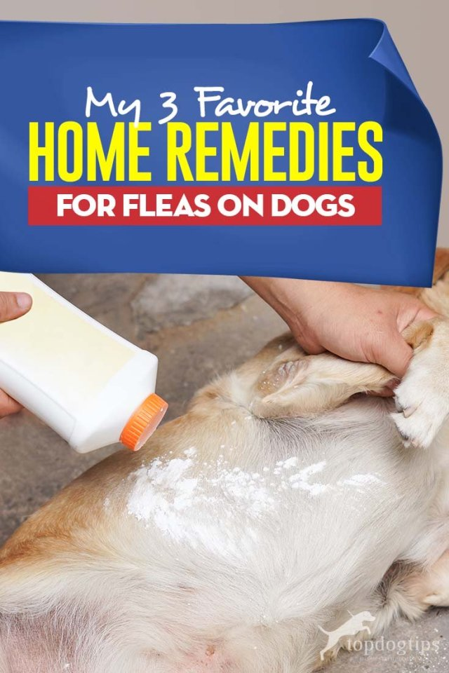 3 Best Home Remedies for Fleas on Dogs