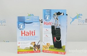 Halti No-Pull Harness and Training Lead Giveaway