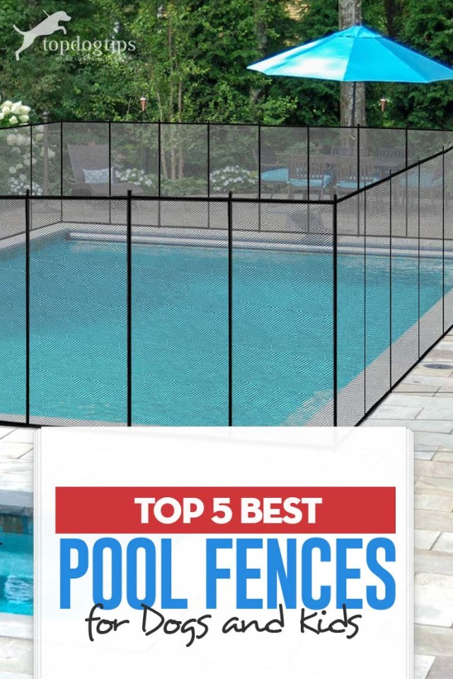 The 5 Best Pool Fences for Dogs