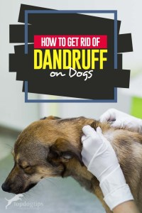 Tips on How to Get Rid Of Dog Dandruff