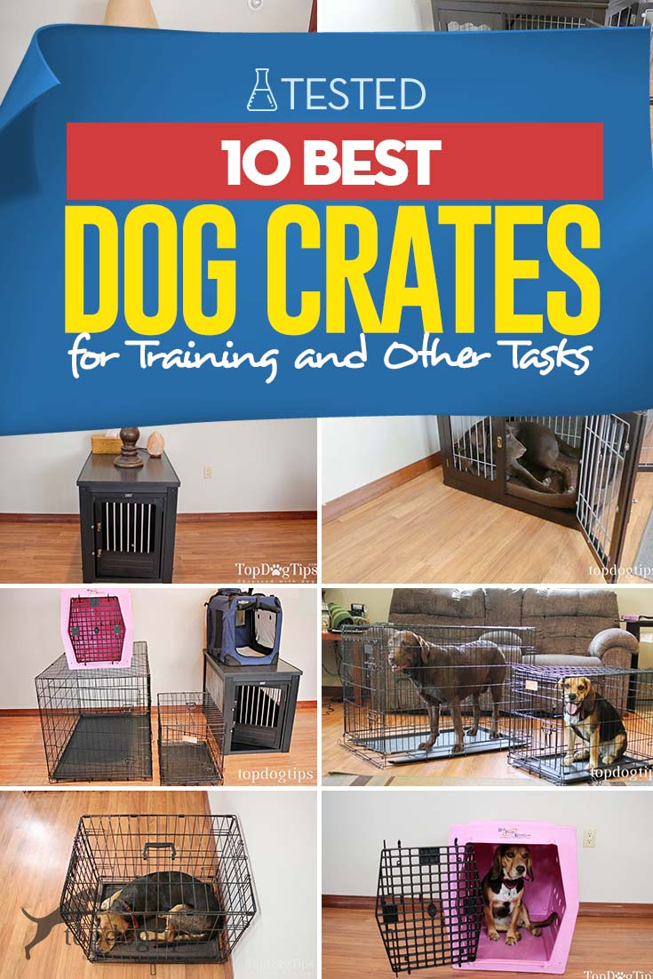 Top 10 Best Dog Crates for Training and Other Tasks